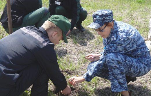 100 кедровых саженцев высажены членами ОНК   в исправительных учреждениях Приморья